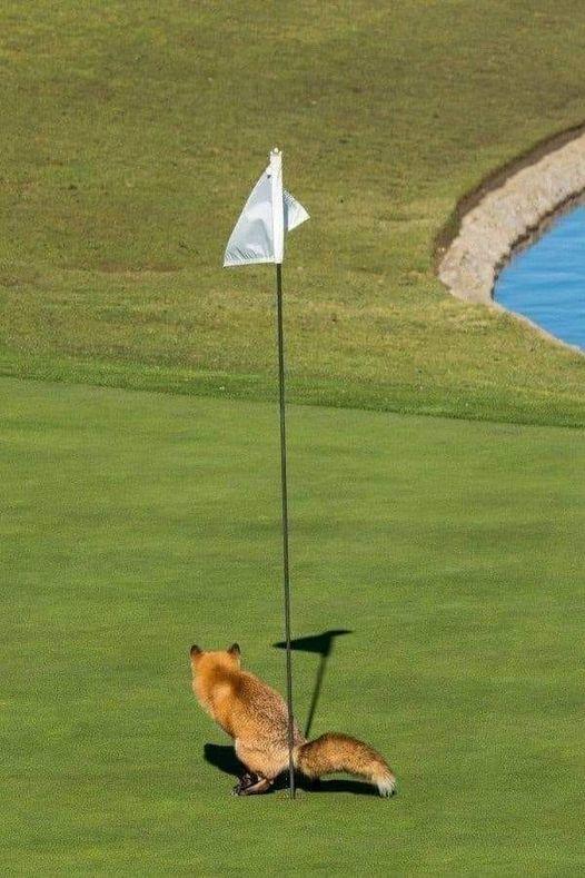 fox crap.jpg